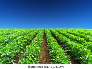 Green rows and blue sky. Natural composition