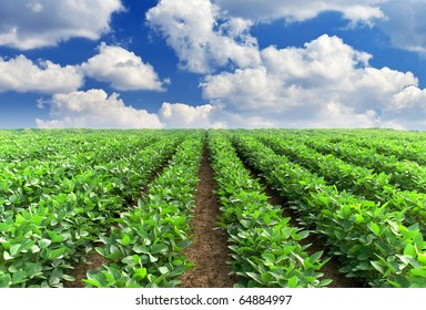 Green rows on field and greater white cloud