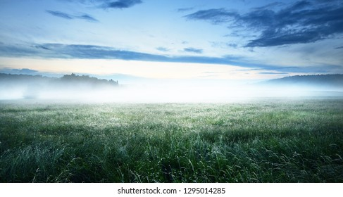 Green rural field covered with morning fog