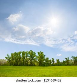 green rural field scene under a sparkle sun