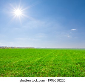 green rural field under a sparkle sun, countryside rural agricultural background