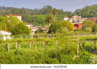 Green rural scene with farmlands and houses in Caldas de Reis town