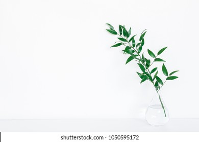 Green ruscus leaves on white background. Front view, copy space