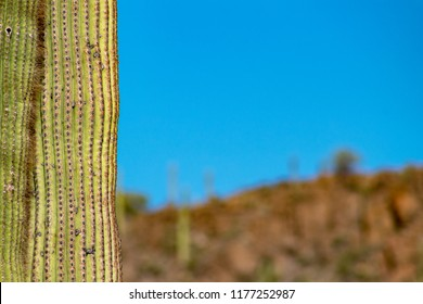 A green saguaro cactus frames the left in focus with a Sonoran desert landscape background featuring strong bokeh and a blue sky, great space for text or words. Tucson, Arizona. Winter 2018.