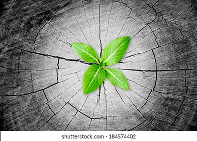 Green sapling grow from tree stump - regeneration and development concept