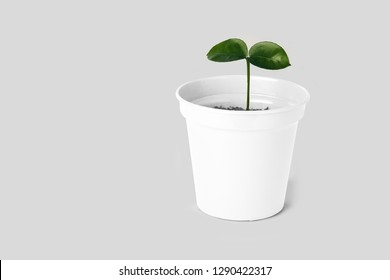 green Sapling in pot
