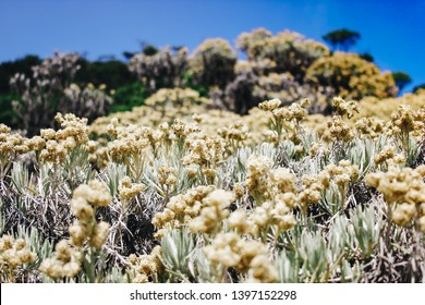 Green Scenery, Sunsets in the mountain, Sunrise in the hills, forest, Edelweiss flower