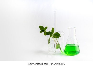 Green science and Green chemistry,  Plant was extracted in research with equipment and glassware on white background