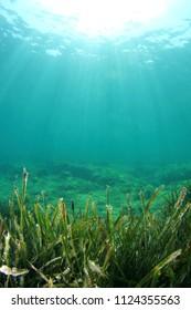 Green sea grass blue water