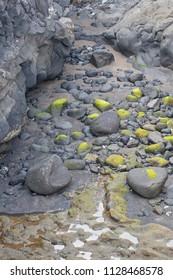 Green sea rocks on the beach.
