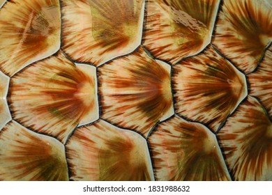 The green sea turtle is close up skin for animal marine pattern