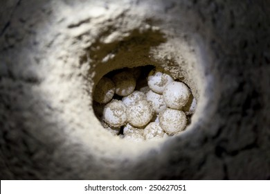 Green sea turtle eggs in sand hole on a beach at hatchery site
