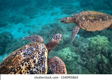 Green sea turtle on the ocean floor among coral