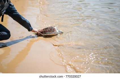green sea turtle released into the sea by someone
