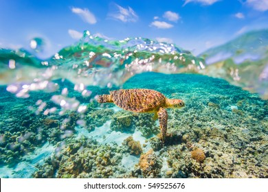 A Green Sea Turtle swimming over shallow reef with a clear sky and bubbles in the water