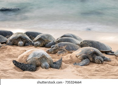 Green sea turtles having a restful sleep on Ho'okipa beach, Maui, Hawaii