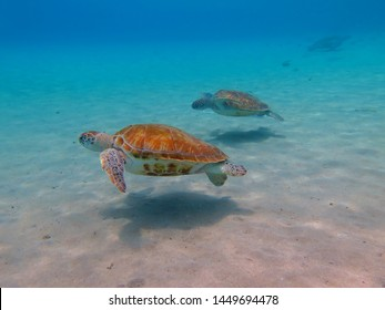 Green sea turtles in the shallow ocean. Tropical sea with marine animals. Group of turtles, underwater photography from scuba diving. Aquatic life photo.
