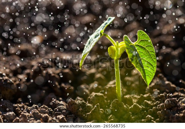 Green seedling growing on the ground in the rain.