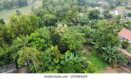 Green settlements, unspoiled with fresh air, because of lush vegetation. Lampung, Indonesia.