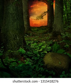 Green shady forest during red sunset