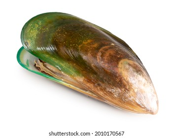 Green Shell mussels  isolated on white background, Fresh New Zealand mussels or Perna Canaliculus on White Background