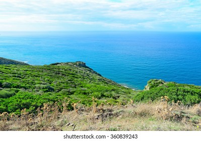 green shore in Alghero, Sardinia