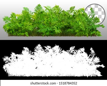 Green Shrub. Fern plant isolated on a transparent background via an alpha channel of great precision. Bush of lush green leaves. High quality mask  for professional composition.