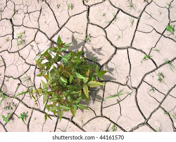 a green shrub struggles for life in cracked and parched clay soil