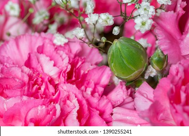 Green small carnation bud flower.