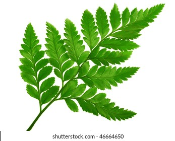 Green small fern on the white background