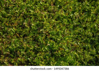 Green and small groundcover plants