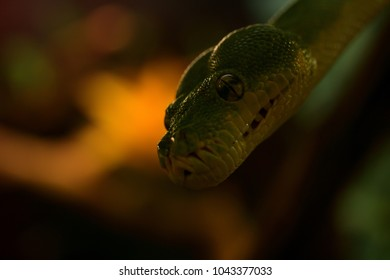 green snake closeup in front of brown background. close and dangerous snake head