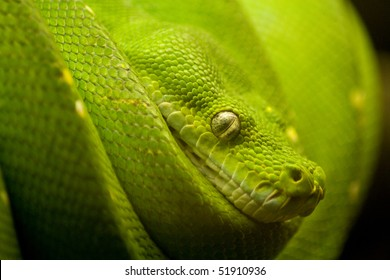 a green snake on the hunt