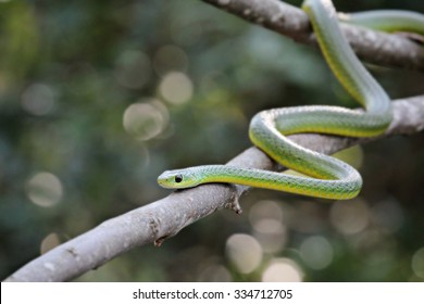 green snake on a tree