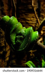 Green snake in the tree