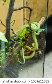 Green snake in a zoo