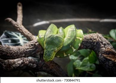 green snake at a zoo
