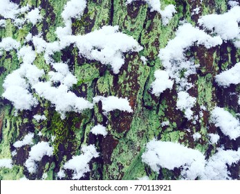 Green Snow Tree in the winter forest