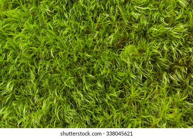 Green soft moss background