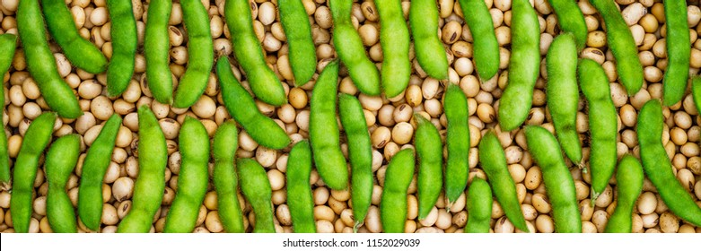 Green soybean pod on dry soy beans background. Soy bean mature seeds banner, close up.