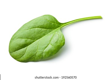 green spinach leaf on white background