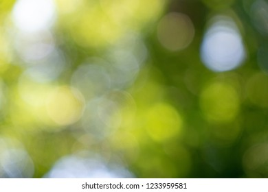 Green spring blurred background with yellow and white bokeh circles. Natural layout.