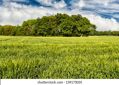green spring field with tree line landscape