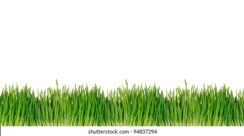 Green spring grass background over white