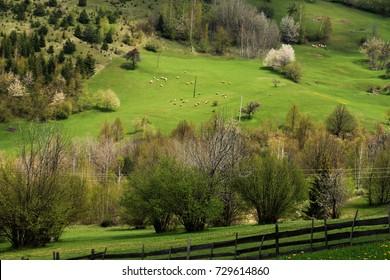 Green spring landscape on mountain near Sarajevo , Bosnia and Herzegovina