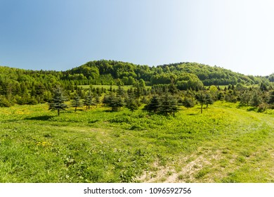 Green spring meadow in mountains, composition of nature