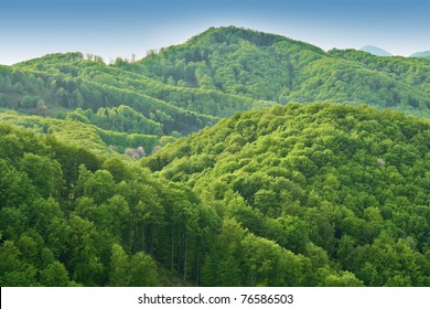 Green spring nature flourishing towards mountain top