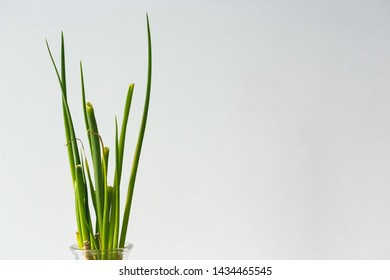 Green spring onion against white background
