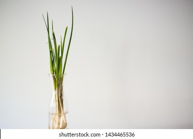 Green spring onion vase against white background