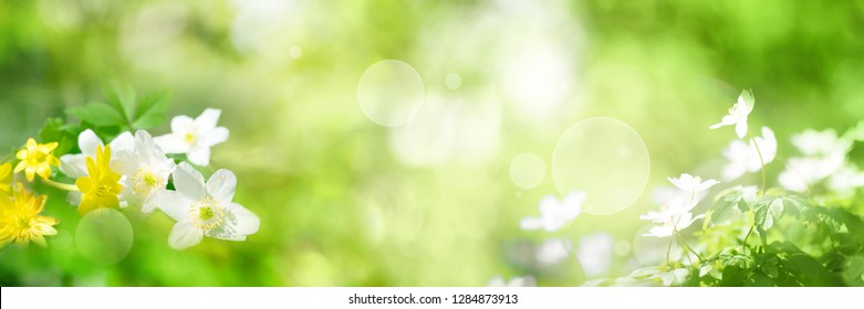 Green spring scenery with bright bokeh effect for a background